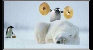 polarbeer